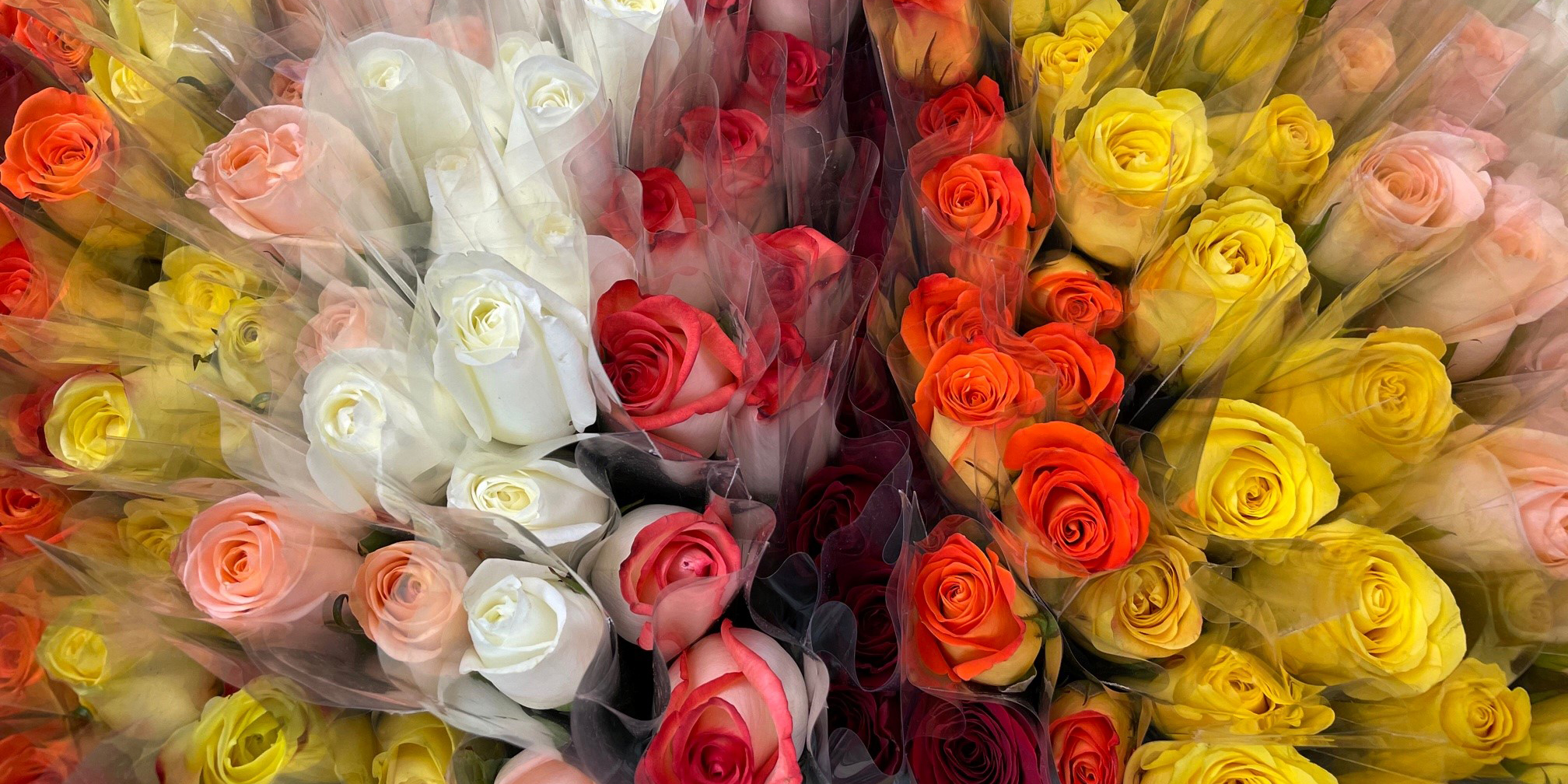 Hospice team spreads Valentine's cheer